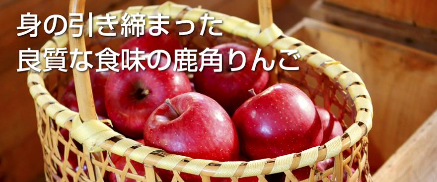 身の引き締まった良質な食味の鹿角りんご